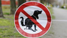 Huisdieren meenemen naar Spanje